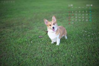 10月の壁紙カレンダー: ご機嫌なコーギー