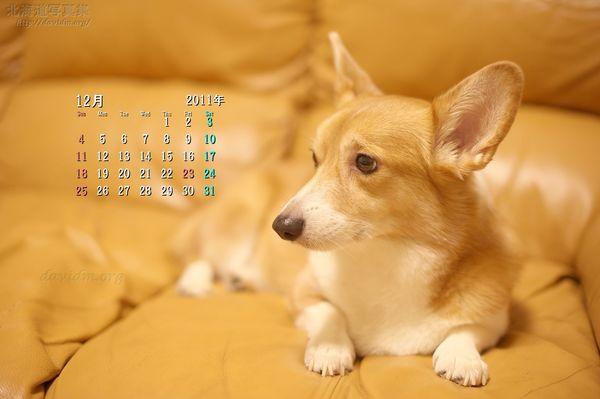 12月の壁紙カレンダー: ソファーの上のコーギー