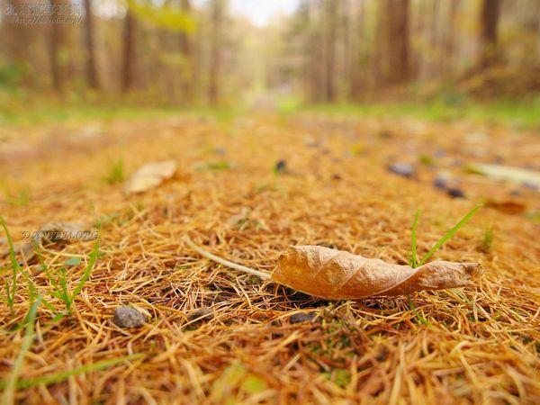 今月の壁紙: 秋の小道