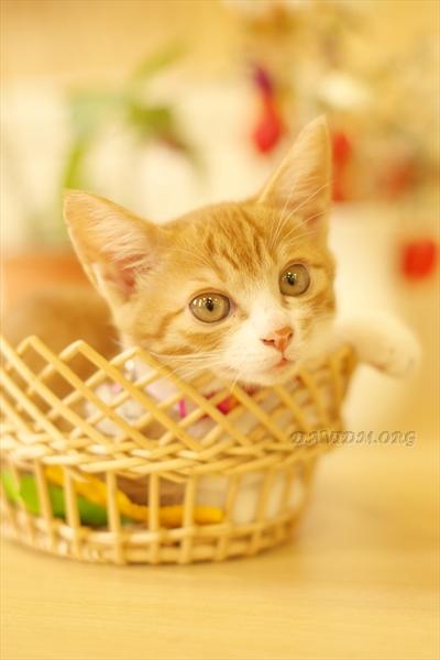 かごの中のネコ