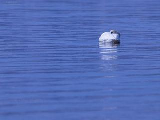 今月の壁紙: 湖面でまどろむ朝