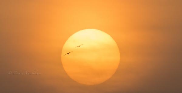夕陽と二羽のカモメ