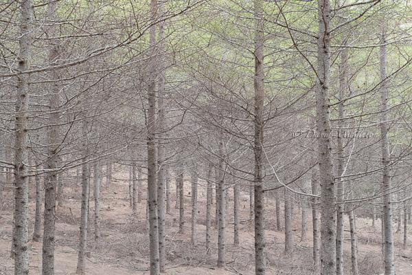 春の色が訪れた森