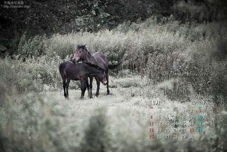 11月の壁紙カレンダー: 馬の親子