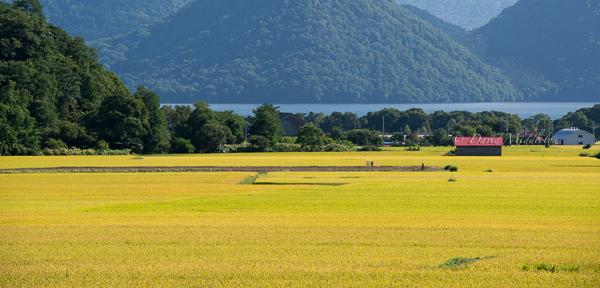 洞爺湖のお米