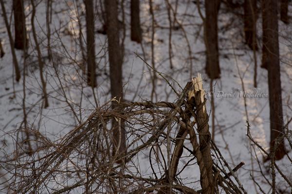 強風に折られた枝