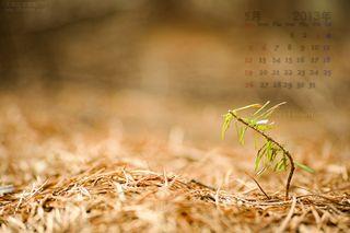 5月の壁紙カレンダー: 新しい命