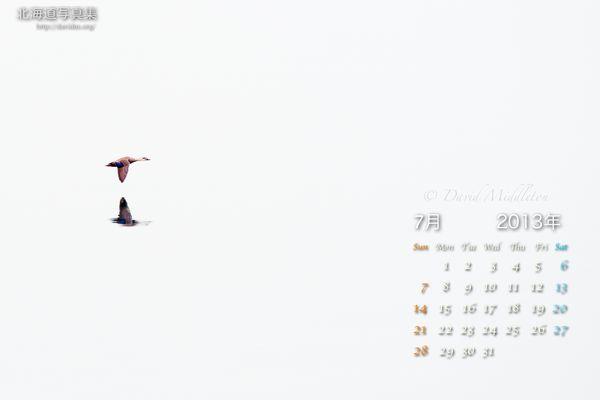 7月の壁紙カレンダー: 霧の洞爺湖とカルガモ