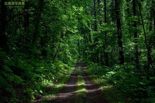今月の壁紙: 夏の森