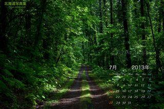 7月の壁紙カレンダー: 夏の森