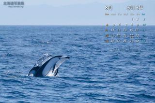 8月の壁紙カレンダー: 室蘭のカマイルカ