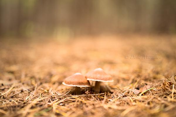 森のキノコの写真