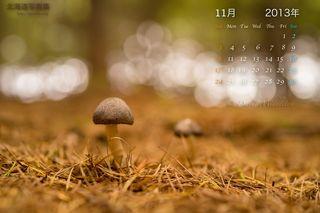 11月の壁紙カレンダー: 秋の森のキノコ