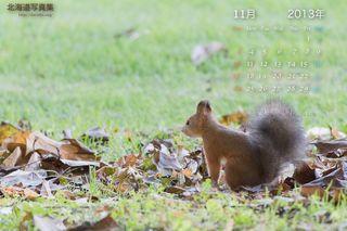 11月の壁紙カレンダー: 冬支度中のエゾリス