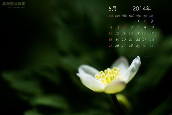 5月の壁紙カレンダー: 春の訪れを知らせる二輪草