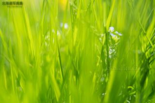 今月の壁紙: 草むらに咲く花