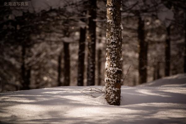 今月の壁紙: 冬の森