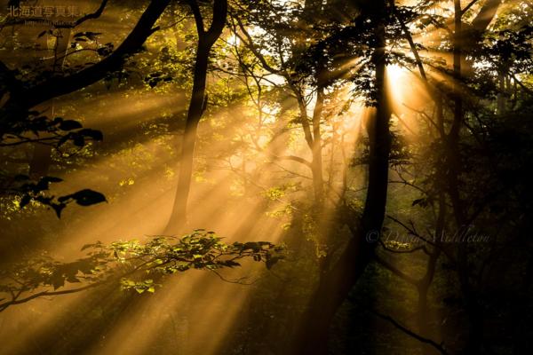 今月の壁紙: 霧が立ち込める森の中