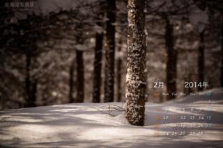 2月の壁紙カレンダー: 冬の森