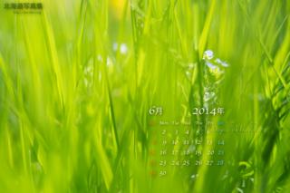 6月の壁紙カレンダー: 草むらに咲く花
