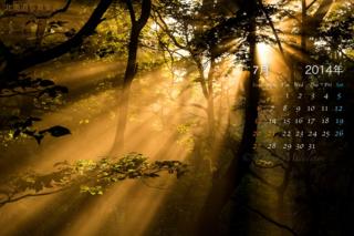 7月の壁紙カレンダー: 霧が立ち込める森の中