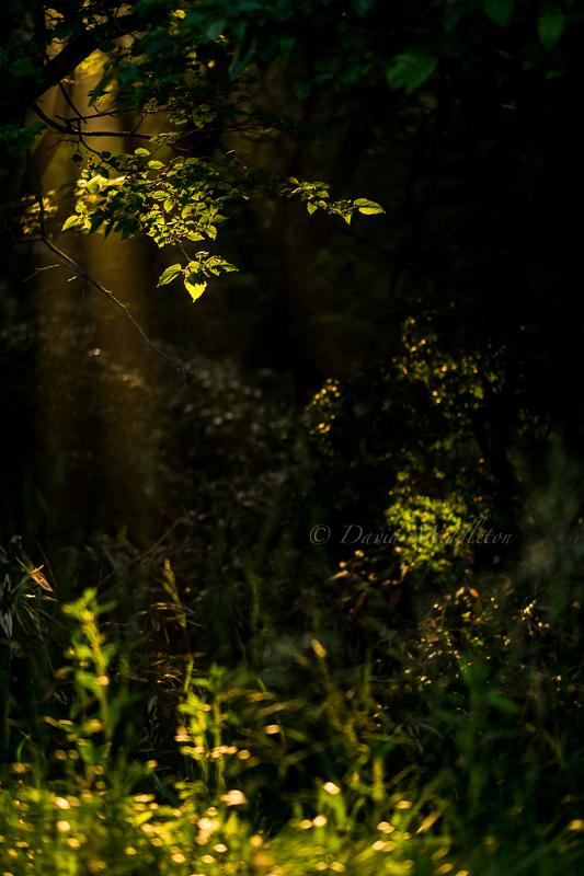 森の木漏れ日