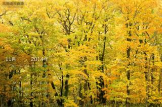 11月の壁紙カレンダー: 秋色に染まる森