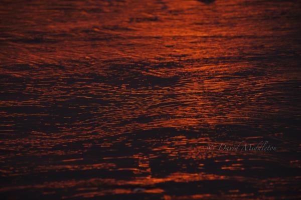 朝陽色の波紋の写真