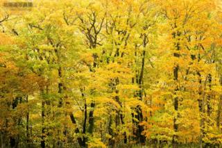 今月の壁紙: 秋色に染まる森