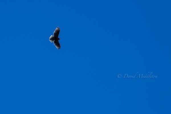 秋の空と鷹