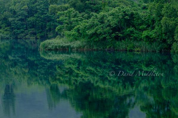 森を映す水面